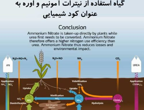 شرح سیکل انتقال نیتروژن از خاک به سمت گیاه استفاده از نیترات آمونیم و اوره به عنوان کود شیمیایی